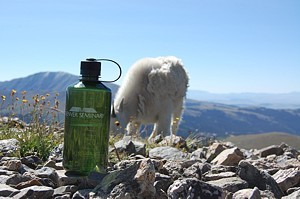 wwb-with a mountain goat
